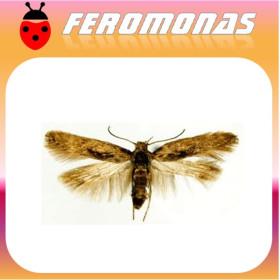 Feromonas PHTHORIMAEA polilla patata