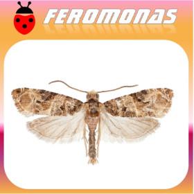 Feromona LOBESIA BOTRANA polilla del racimo