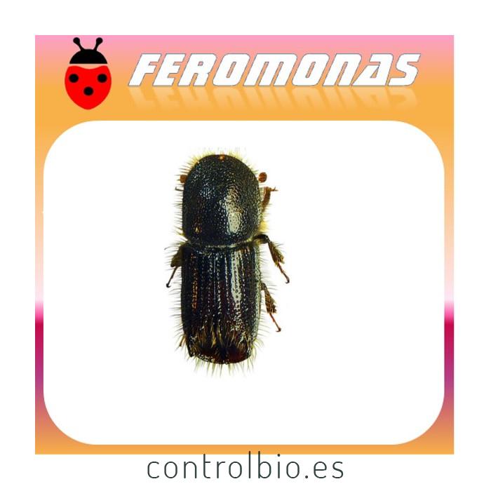 IPS CEMBRAE Escarabajo de la corteza del alerce