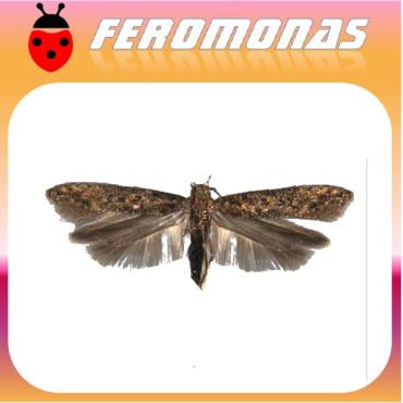 PHERODIS Feromona Tuta absoluta (2 Ud)