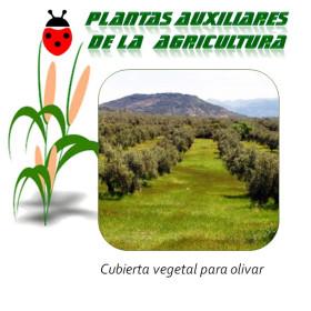 Cubierta vegetal para olivar