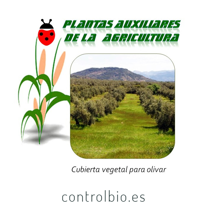 Cubierta vegetal para olivar (1kg semilla)