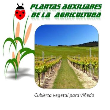 Cubierta vegetal para vid (1 Kg semillas)