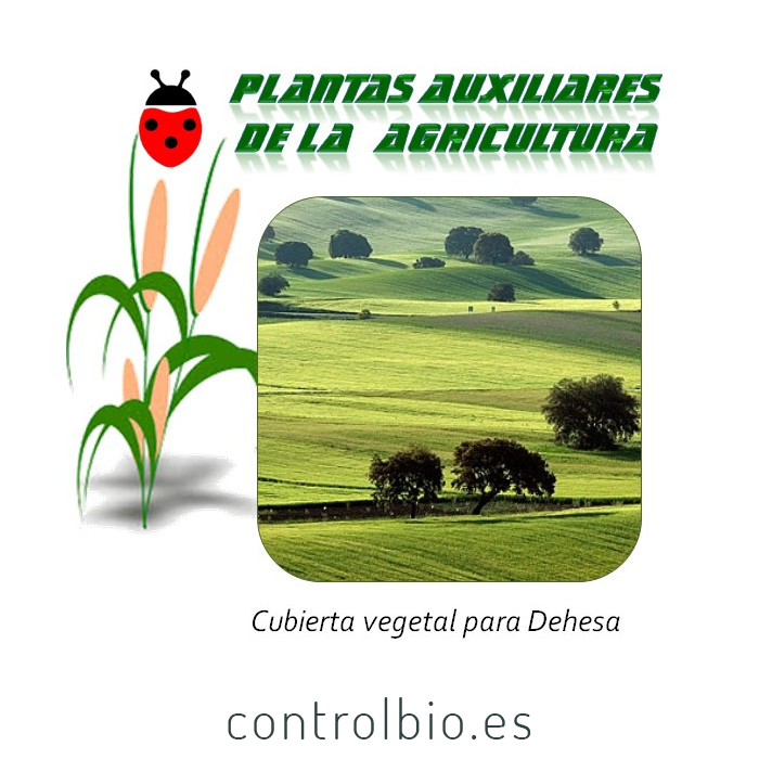 Cubierta vegetal para dehesa (1 Kg semillas)