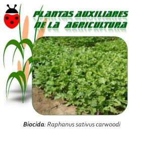 Avena Strigosa Exito Planta biocida