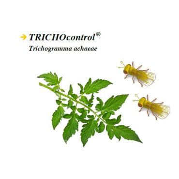TRICHOCONTROL tarjetas Trhichogramma achaeae
