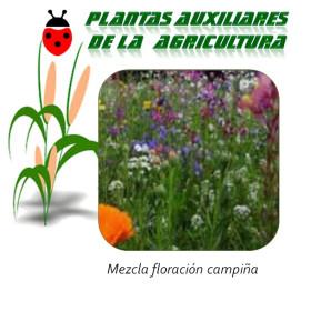 Mezcla Floración campiña