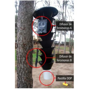 TOMICUS DESTRUENS Barrenillo del pino