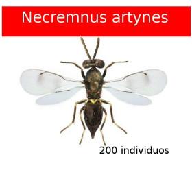 ARTYPAK 200 Necremnus artynes contra tuta absoluta