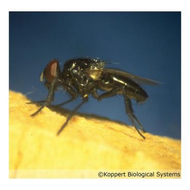 appifly depredador de moscas