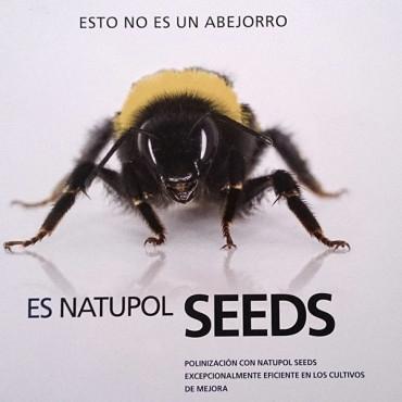 Natupol seeds koppert