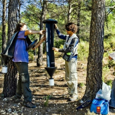 CROSSTRAP Trampa forestal