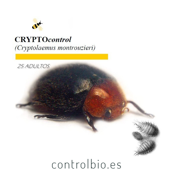 CRYPTOcontrol 1000 Cryptolaemus enemigo natural de cochinillas