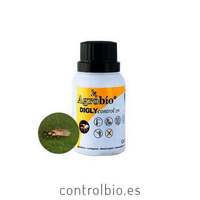 DIGLYCONTROL 250 Diglyphus isaea contra orugas y larvas minadoras de hoja