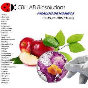 Análisis micológico de hojas,frutos y tallos