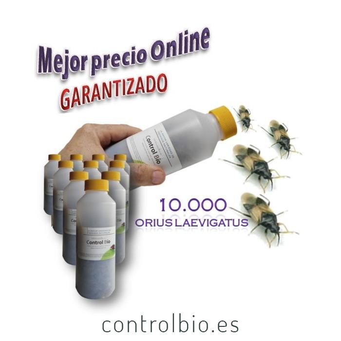 Orius VIP 1000