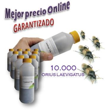 CBi ORIUS 10000 Orius laevigatus chinche depredador
