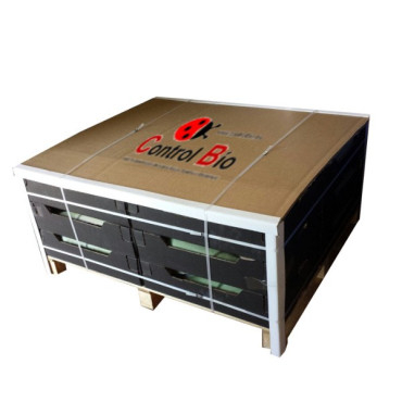 ALOE VERA BARBADENSIS hoja fresca Box 220 Kg