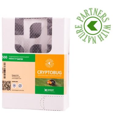 CRYPTOBUG 500 adultos Cryptolaemus montrouzieri