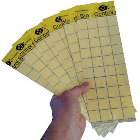 Placa amarilla individual CBi 10 x 30 cm