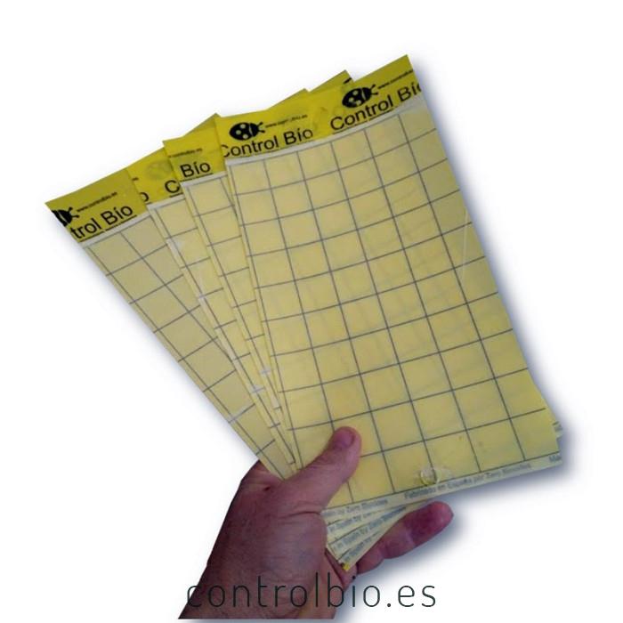 Placa amarilla individual CBi 15 x 30 cm