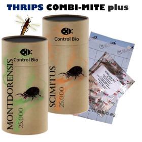 THRIPS COMBI-MITE plus Montdorensis + Scymitus + atrayente kit