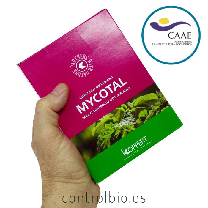 mycotal koppert insecticida microbiano