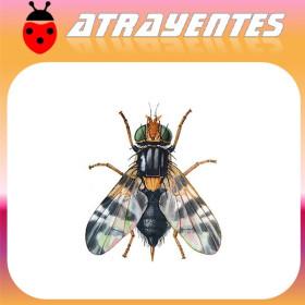RHAGOLETIS COMPLETA mosca del nogal Atrayente 90 días