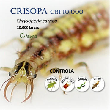 CRISOPA CBi 10.000 larvas depredadoras de pulgón