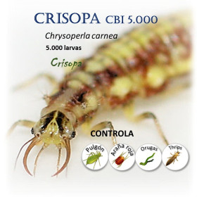 CRISOPA CBi 5.000 larvas depredadoras de pulgón