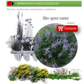 comprar Vitex agnus cactus (Sauzgatillo) BF54