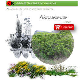 PLANTA PARA SETOS bandeja forestal