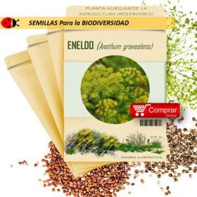 ENELDO Anethum graveolens semillas x 1 g