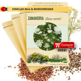 ZANAHORIA Dacus carota semillas x 1 g