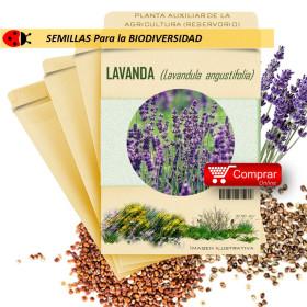 LAVANDA Lavandula officinalis semillas x 1 g