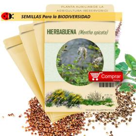HIERBA BUENA Mentha spicata semillas x 1 g