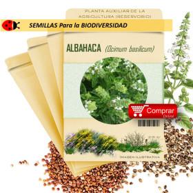 ALBAHACA Ocymum basilicum semillas x 1 g