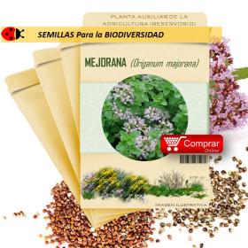 MEJORANA Ocymum basilicum semillas x 1 g