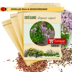 ORÉGANO Origanum vulgare semillas