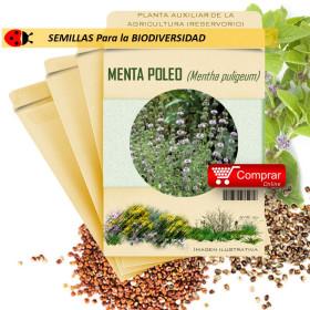 POLEO MENTA Mentha puligeum semillas