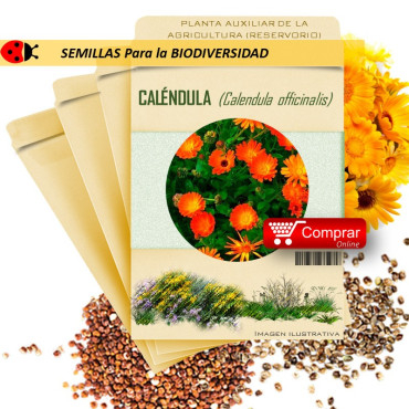 CALÉNDULA C. officinalis semillas