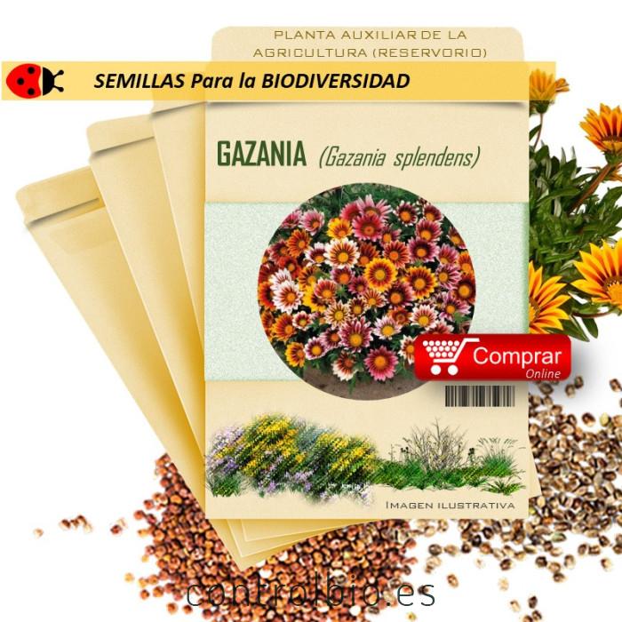 GAZANIA G. splendens semillas
