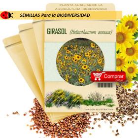 GIRASOL Helianthemum annuus semillas