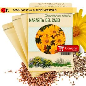 MARGARITA DEL CABO Dimorphoteca sinuatas semillas