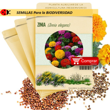 ZINIA Zinnia elegans semillas