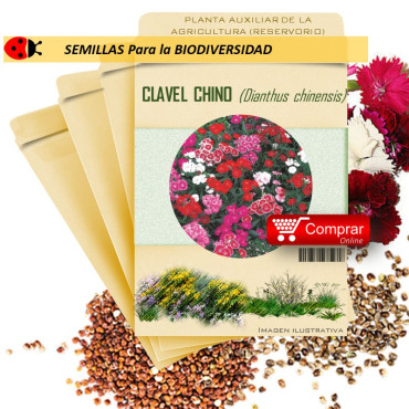 CLAVEL CHINO Dianthus chinensis semillas