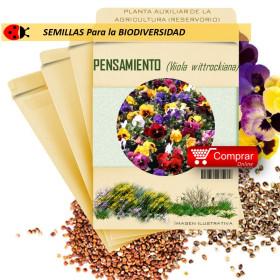 PENSAMIENTO Viola wittrockiana semillas