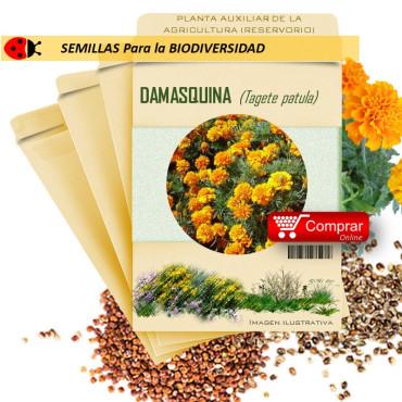 DAMASQUINA Tagete patula semillas
