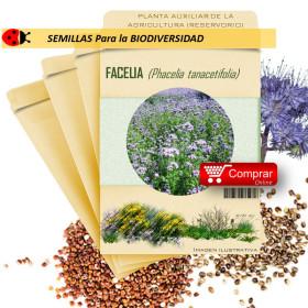 FACELIA Phacelia tanacetifolia semillas