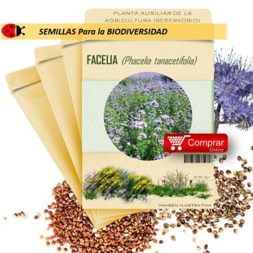 FACELIA Phacelia tanacetifolia semillas X 10 g